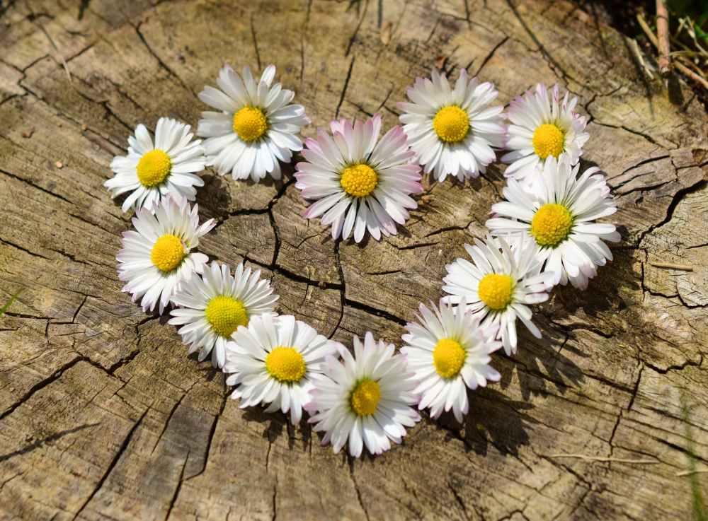 love heart flowers spring